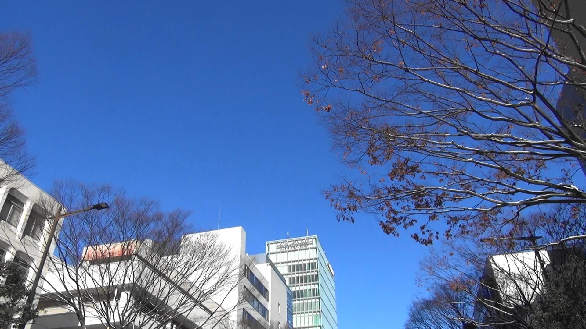 仙台市議会 代表質疑、一般質問がはじまります。